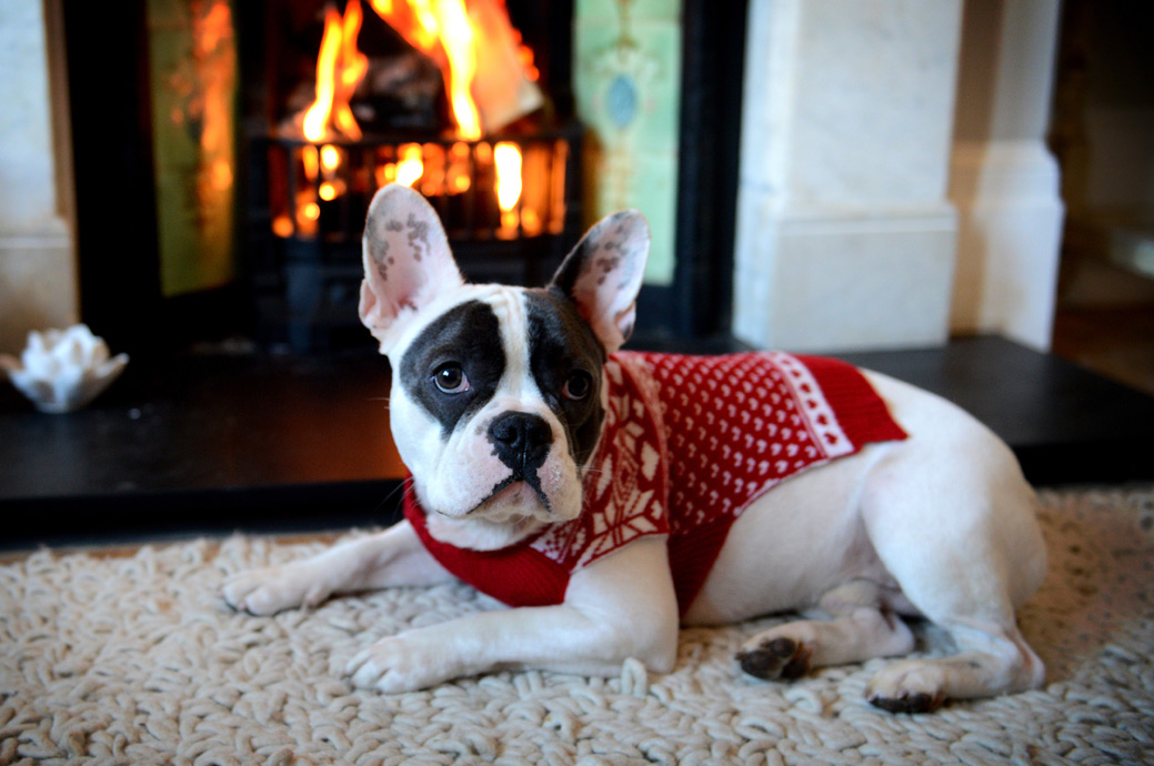 Lovely pet doggy picture taken as he sits by the roaring fire dressed in his smart Christmas jumper captured in Dulwich London portrait photographer
